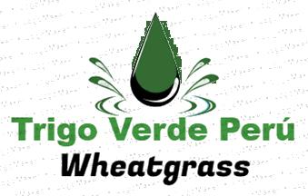 Wheatgrass, trigo verde o pasto de trigo en Perú